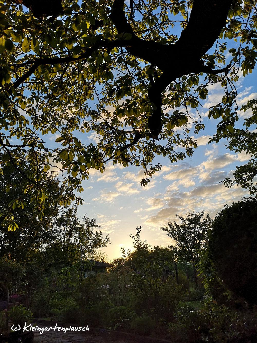 Gut beschützt unterm Blätterdach von Prunus avium, der alten Süßkirsche