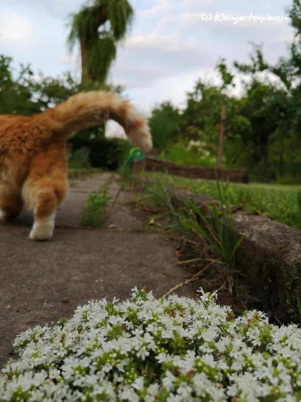 """Hey, kleine Foto-Bomberin in Plüschhosen! Geh mal einen Schritt beiseite, ich möchte doch unseren """"Schmetterlingstempel"""" zeigen!"""