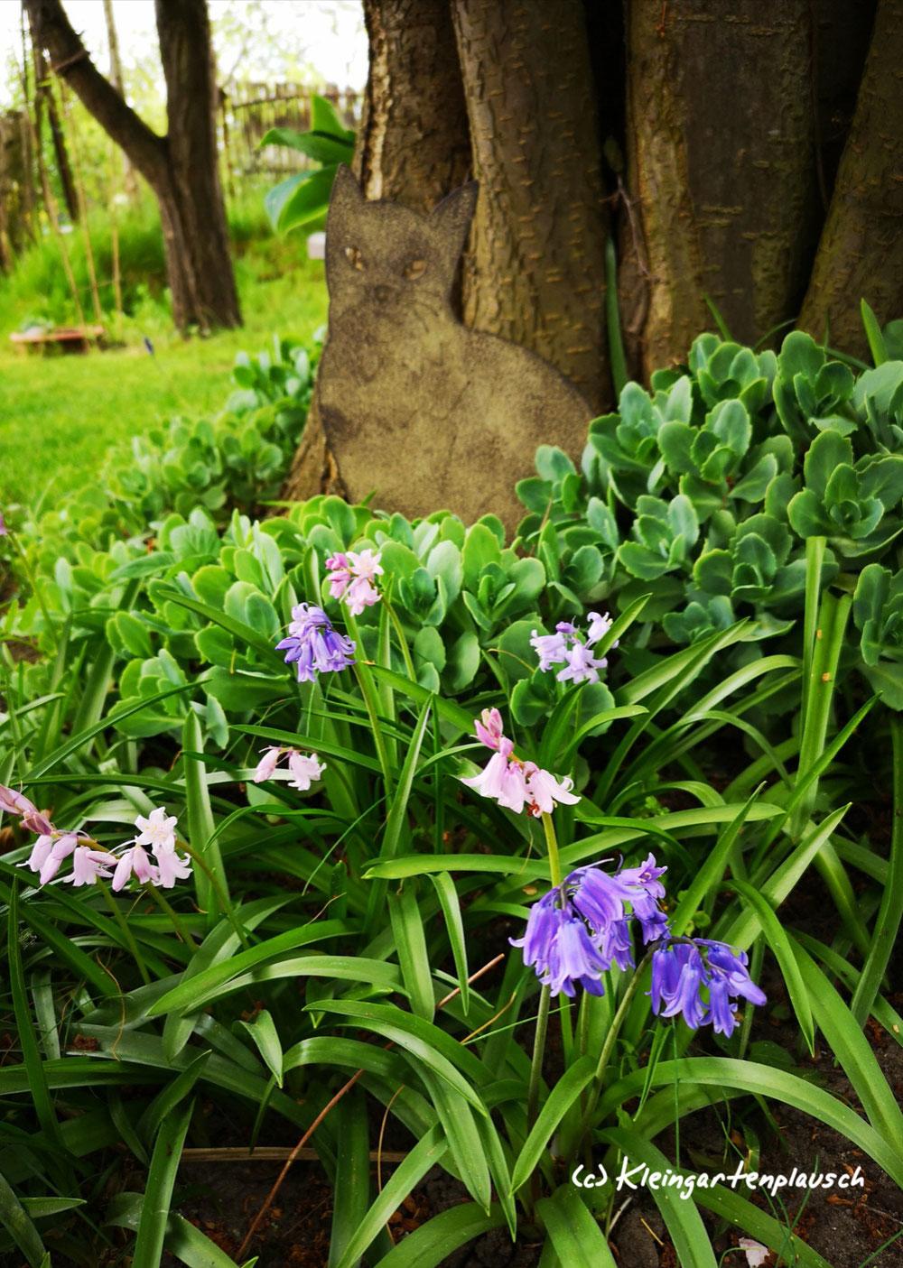 Hasenglöckchen - Symbol der Unbeschwertheit des Frühlings