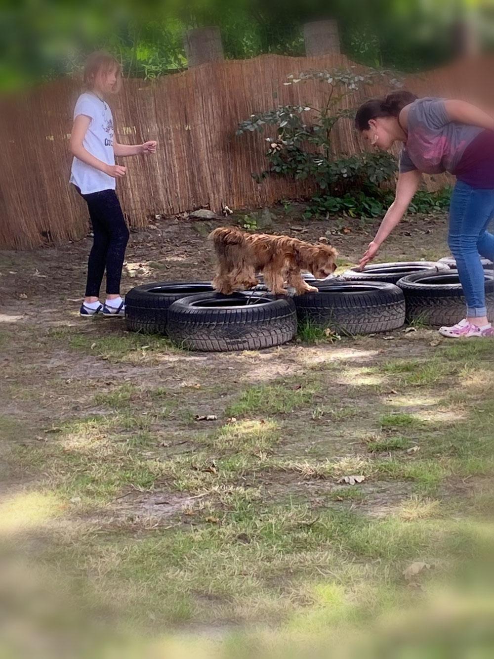 Hunde- Pacour mit Blümchen