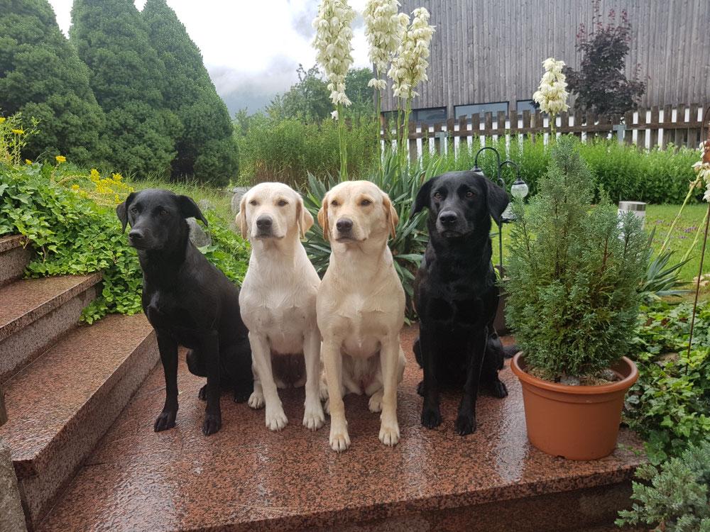 Bailey, Betty, Pepper und Gwyn