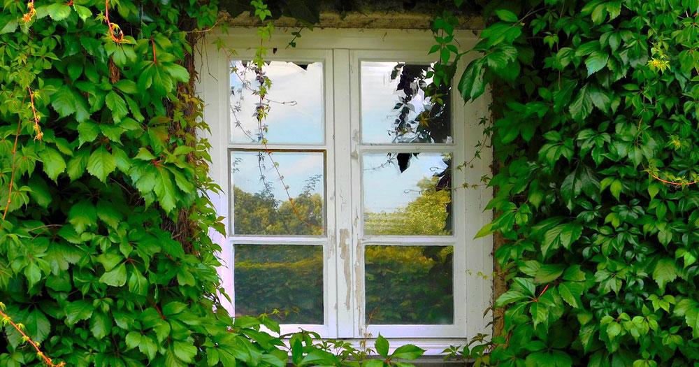 Blog: Warum geputzte Fenster wichtig sind