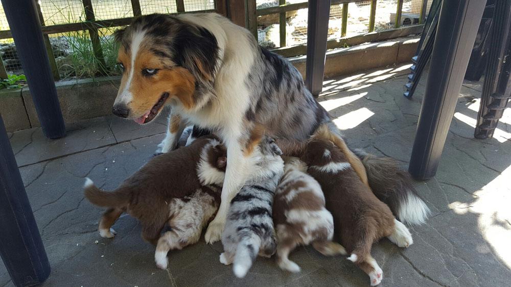 7. Juli: Mama setzt sich jetzt immer hin, denn wir Fettis passen im Liegen gar nicht mehr alle an die Milchbar 😂😍