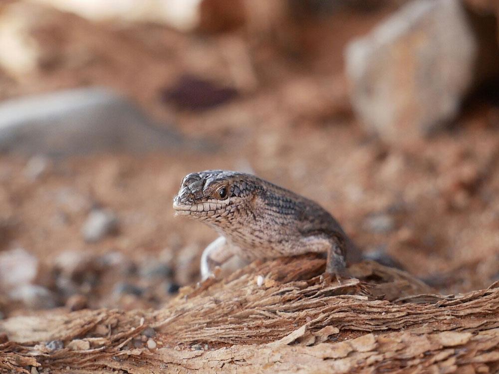 Auch kleine Tiere kann man groß in Szene setzen