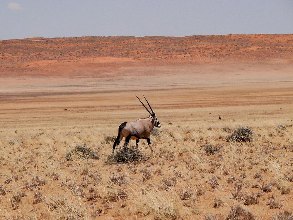 Auch in den Tirasmountains aber im Hintergrund schon die Namib