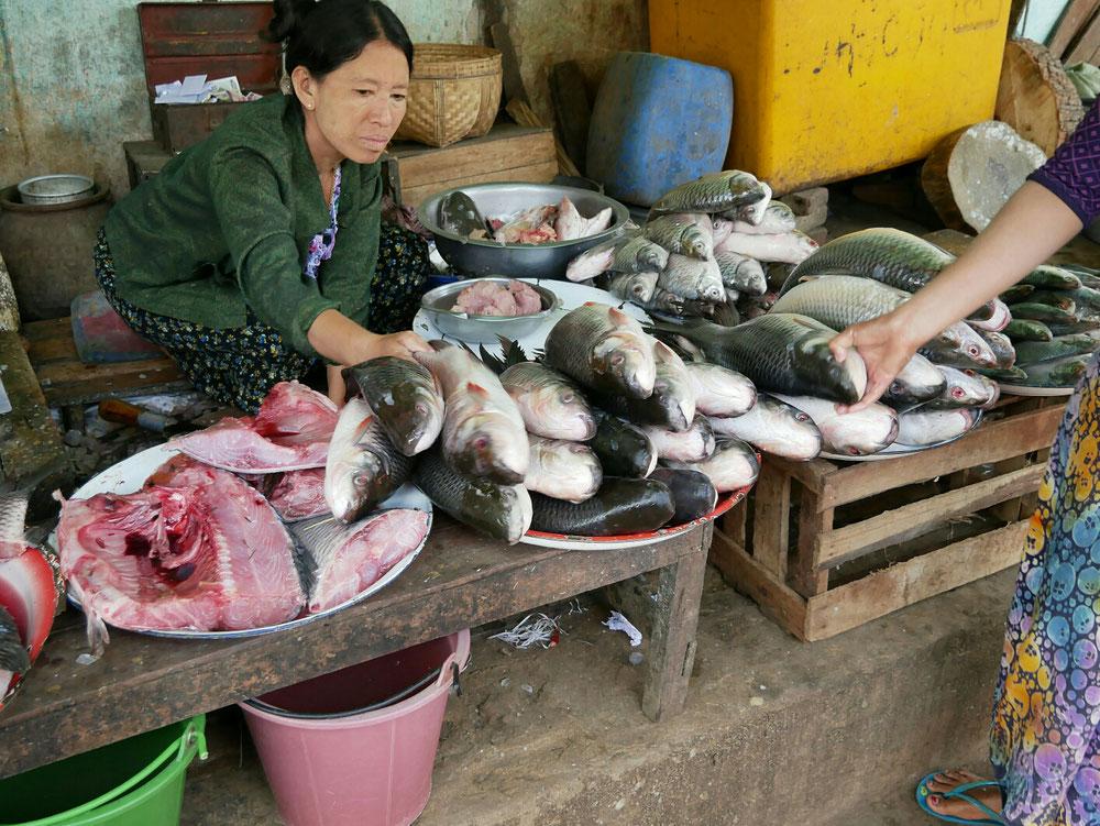 Fangfrischer Fisch auf geschmolzenem Eis