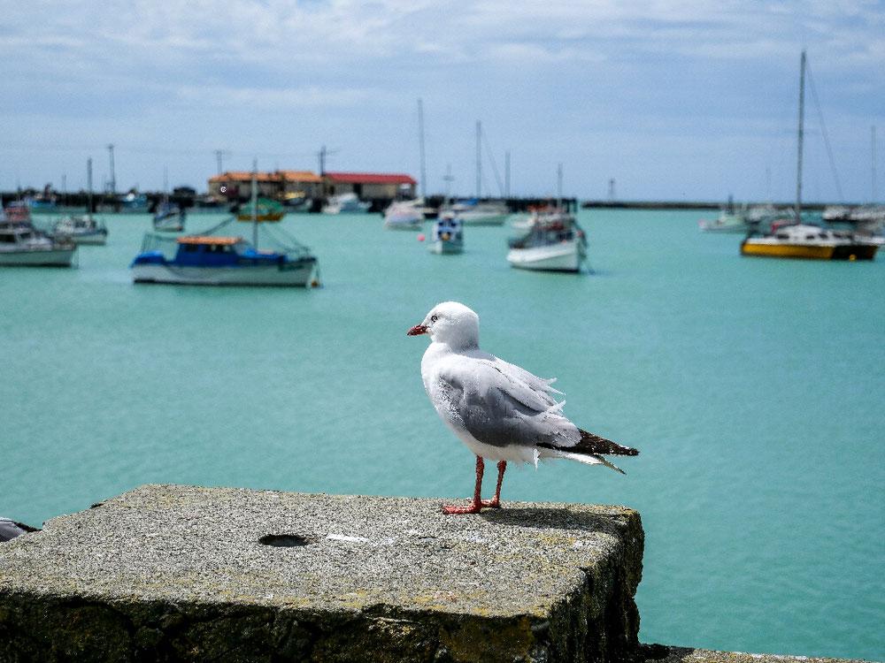Der Hafen von Oamaru - nice isn't it?