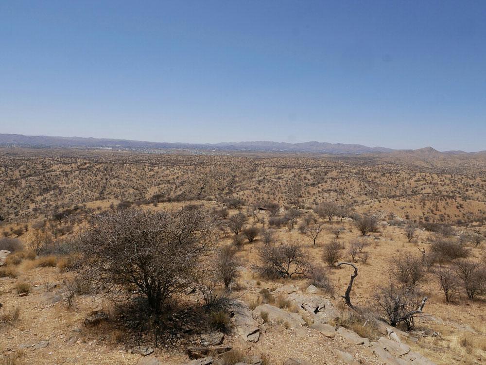 Die Parkanlage mit ihrer typischen Flora und Fauna. Wenn ihr reinzoomt seht ihr im Hintergrund Windhoek