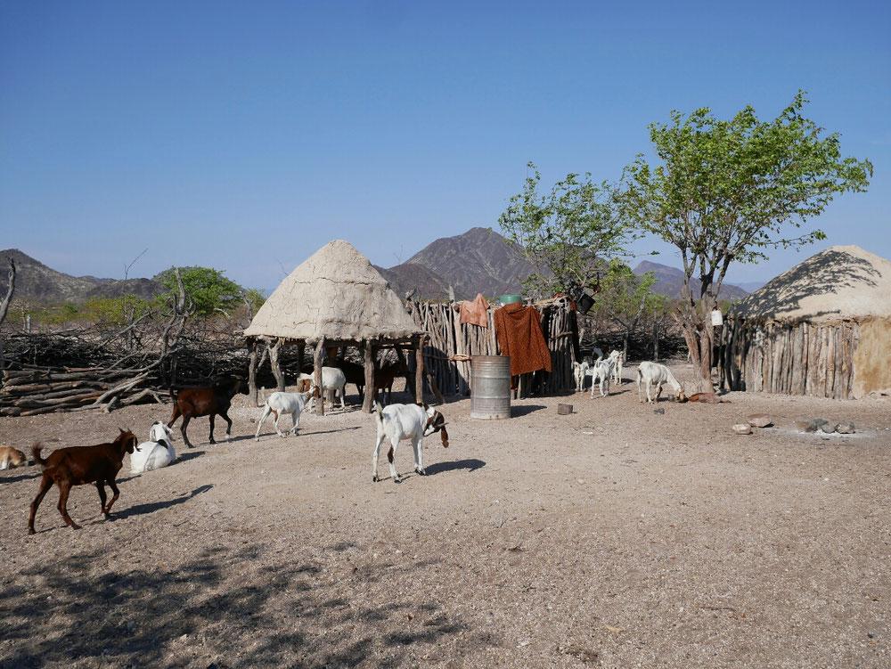 Ziegen und Hütten