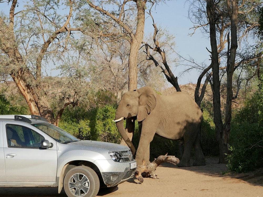 Elefantenattack