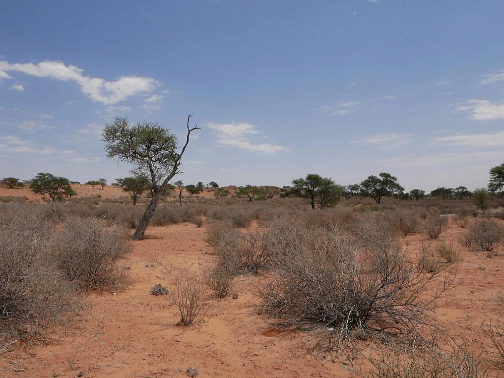 Vorherrschende Farbe in der Kalahari
