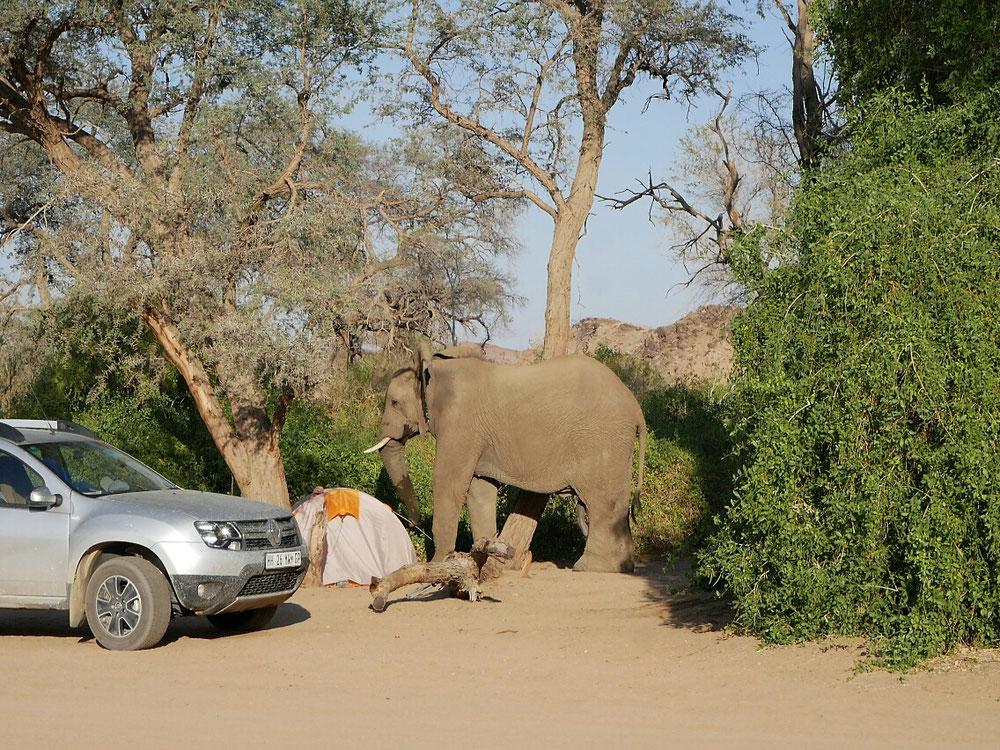 Der Elefant macht sich ans Werk