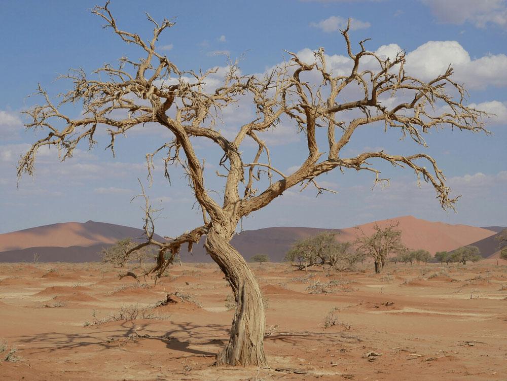 Toter Baum in der Wüste - fand das Motiv so schön