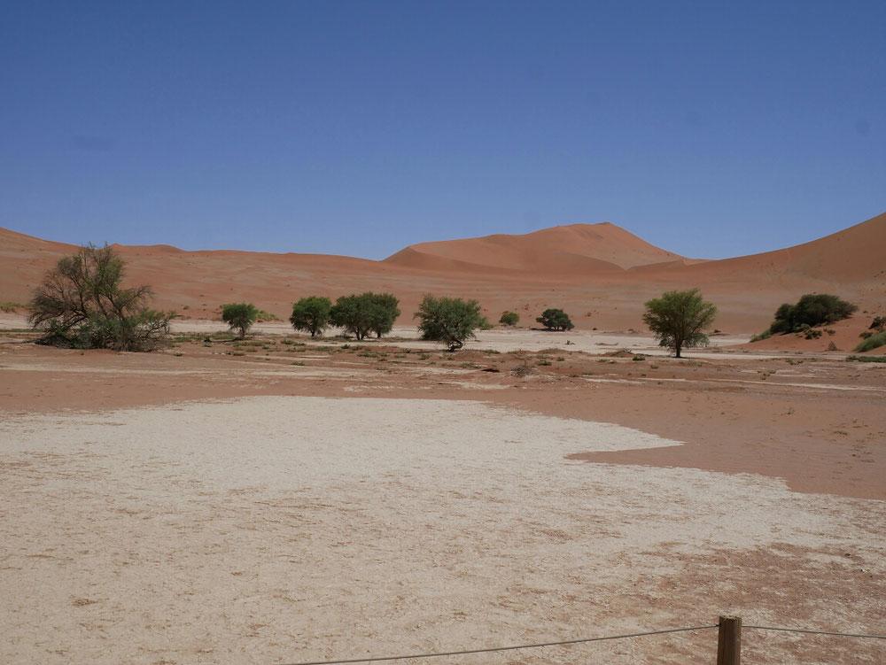 Ja ein paar Bäume in der Wüste, das Sossusvlei