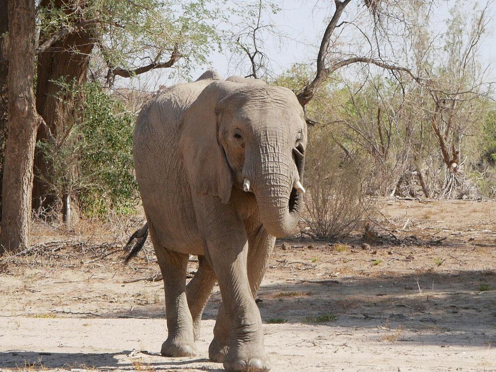 elefanten scheiße