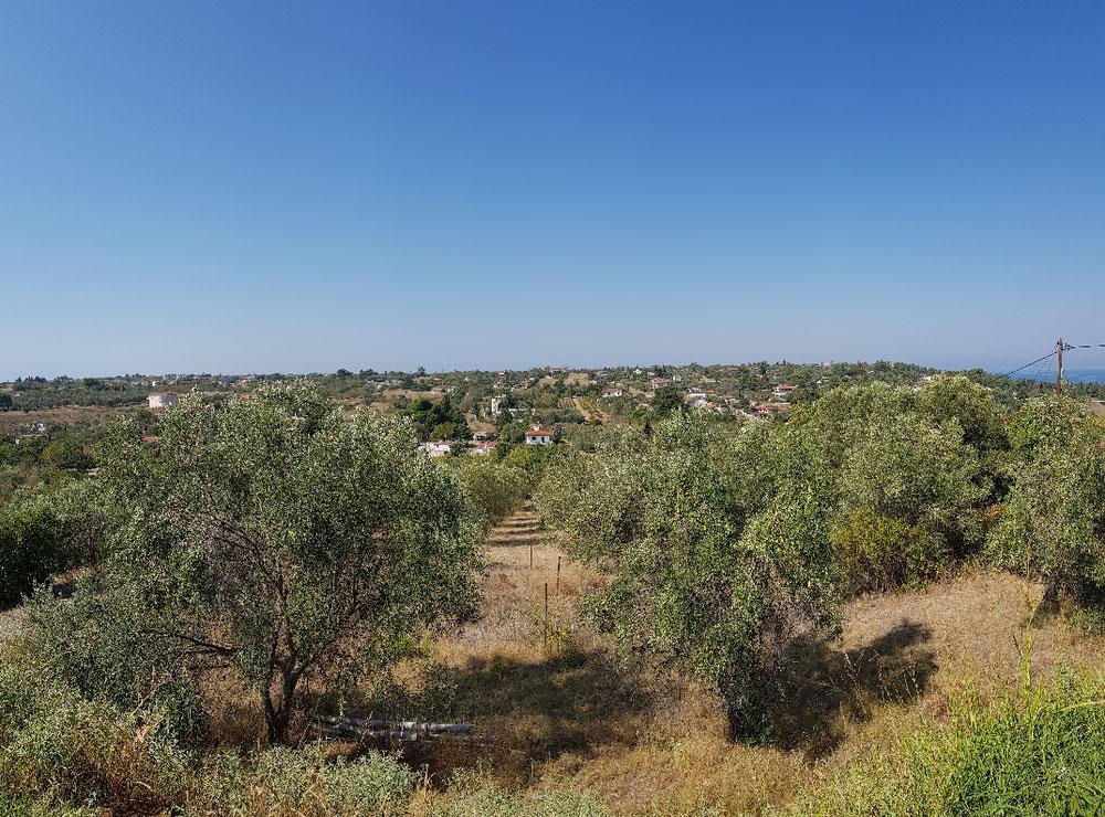 Die Olivenbaum-Wildnis hinter unserem Haus