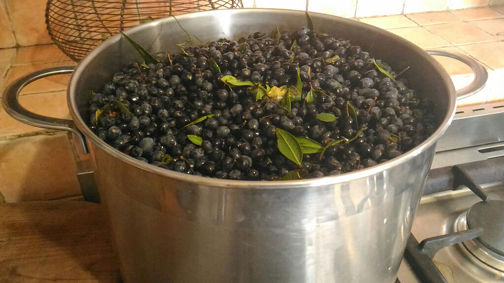 Mirto berries in saucepan