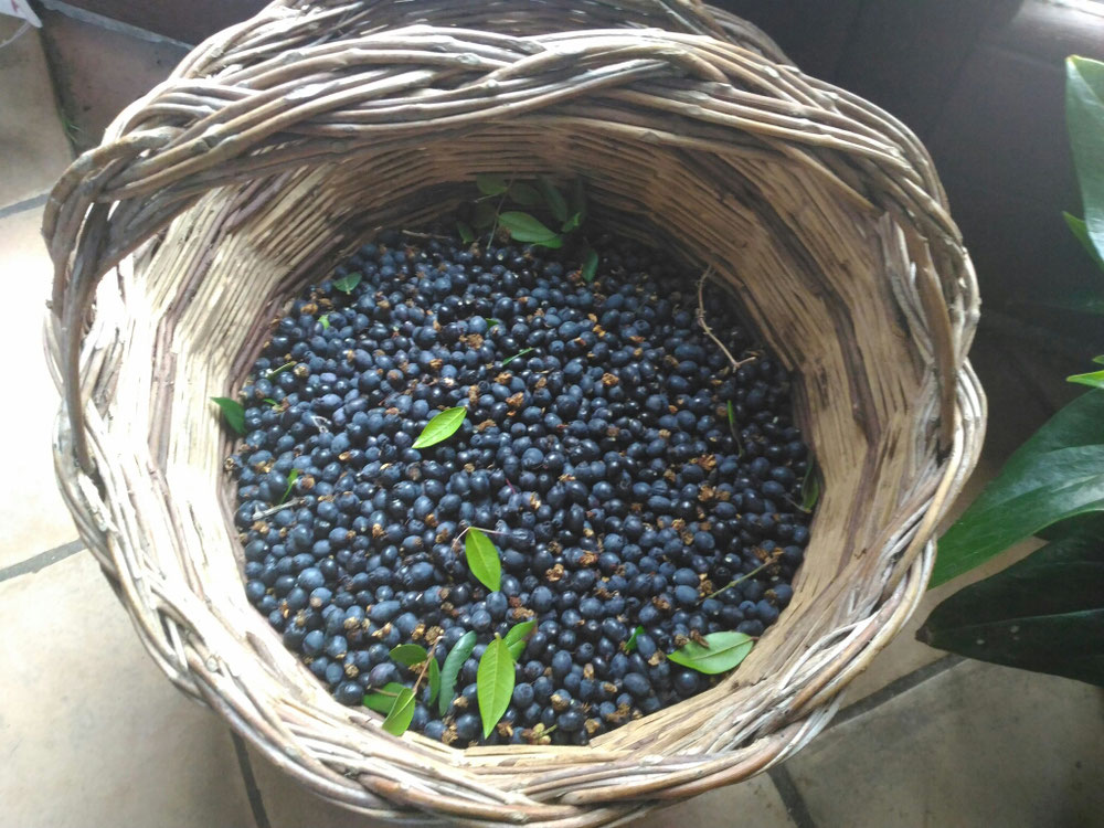 Mirto in the basket