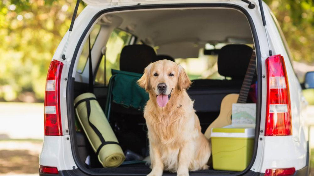 Urlaub mit Deinem Hund - Tipps, die Du beachten solltest!