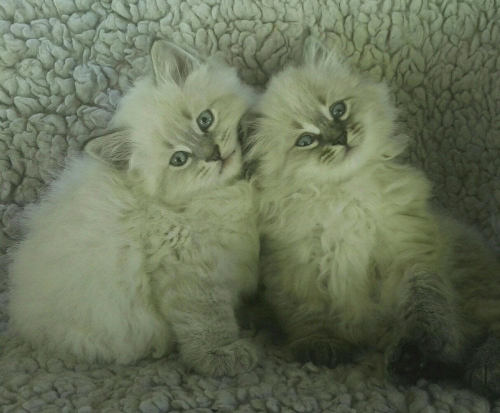 Oushka et Olaf