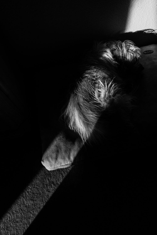 Fotoprojekt Dezember Momente Hund in schwarz weiss