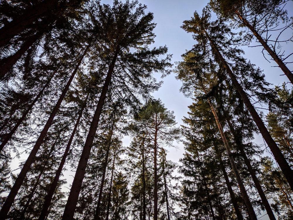 Zum internationalen Tag des Waldes ein Blick in die Baumkronen