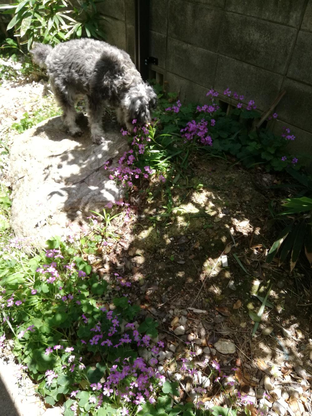 お庭と、我が仔💕