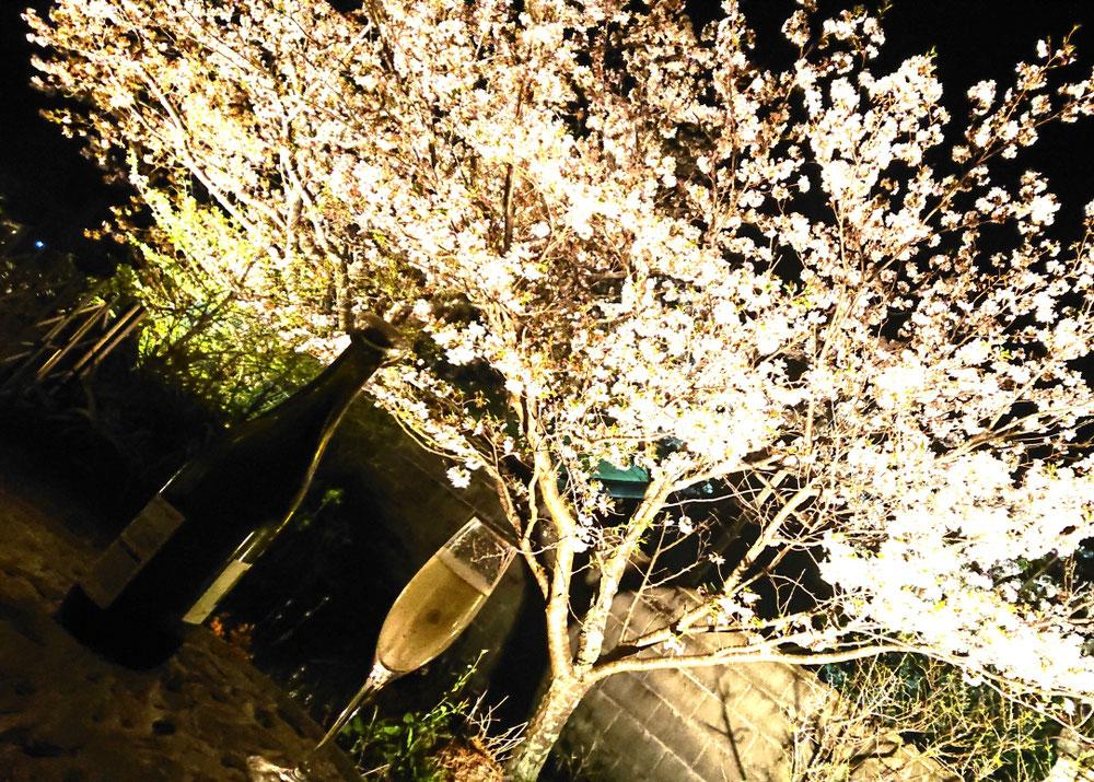 自宅の桜をライトアップ🌸
