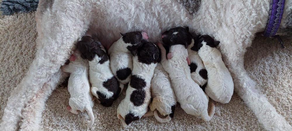8 kleine Wollnasen!