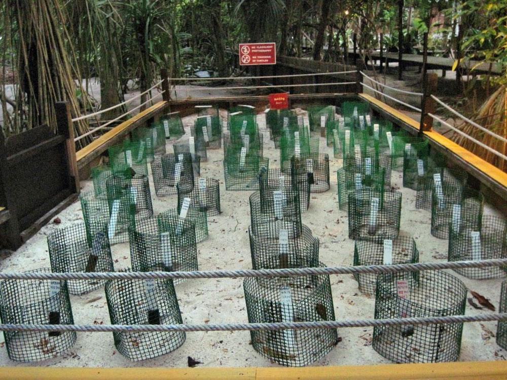 Schildkrötenkindergarten