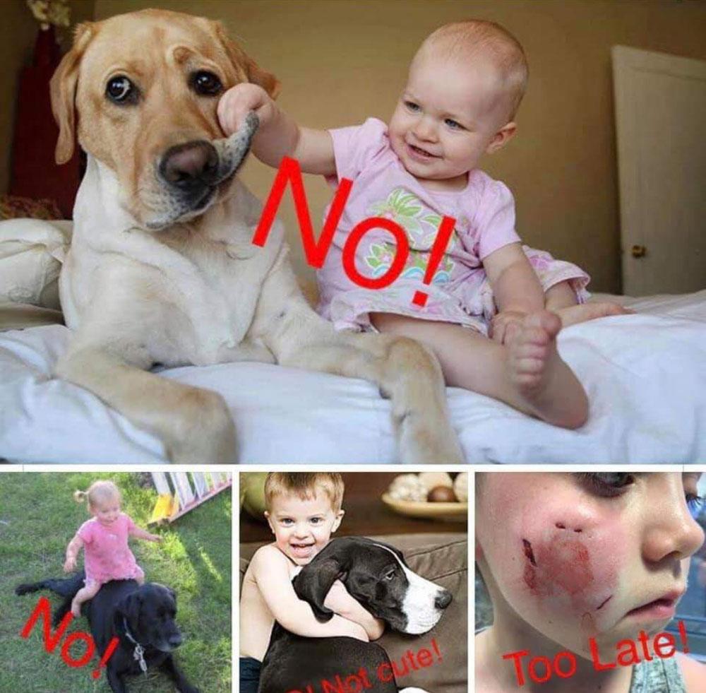 Bild und Text von Kleintierpraxis Dr.Hildenbrand (Facebook)