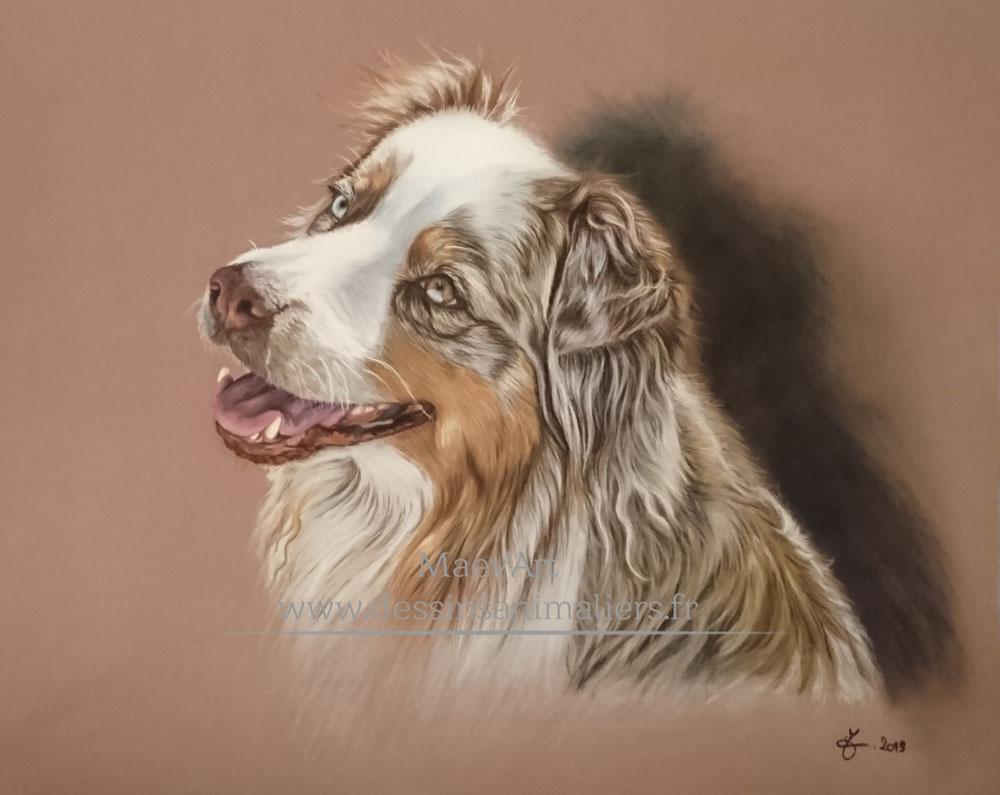 Berger australien dessin animalier portrait pastel sec peinture réaliste
