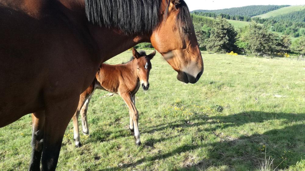 Une petite merveille de plus 😍 Joie de Montcodiol née le 23 Juin 2019