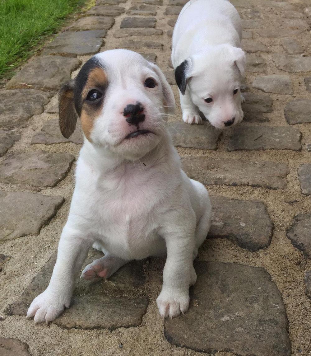 Mila und Molly!