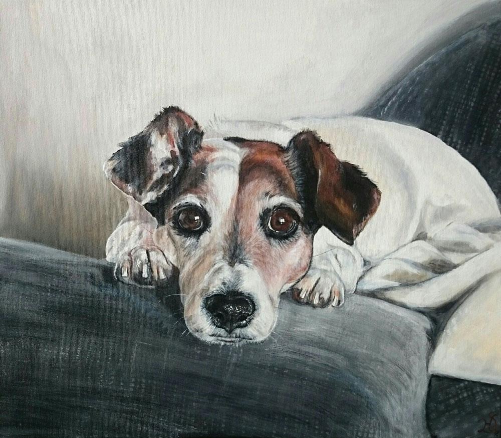 60 x 70 cm Portrait von einem Jack Russel Terrier