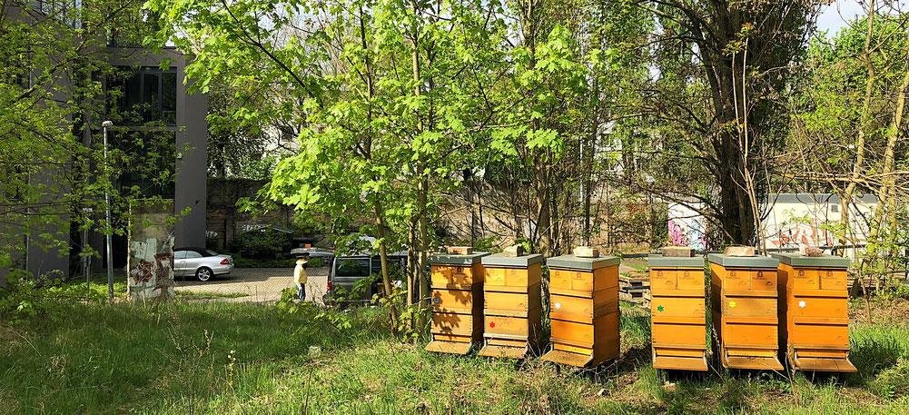 Die Bienen am Stellwerk mitten in der Kräuterwiese.
