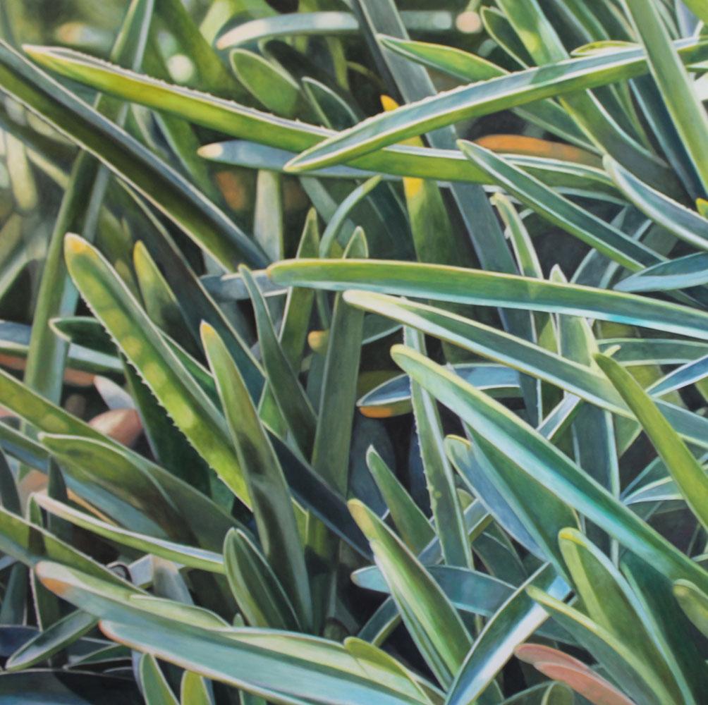 dianthus gratianopolitanus I, 2018, 100x100cm, oil on linen