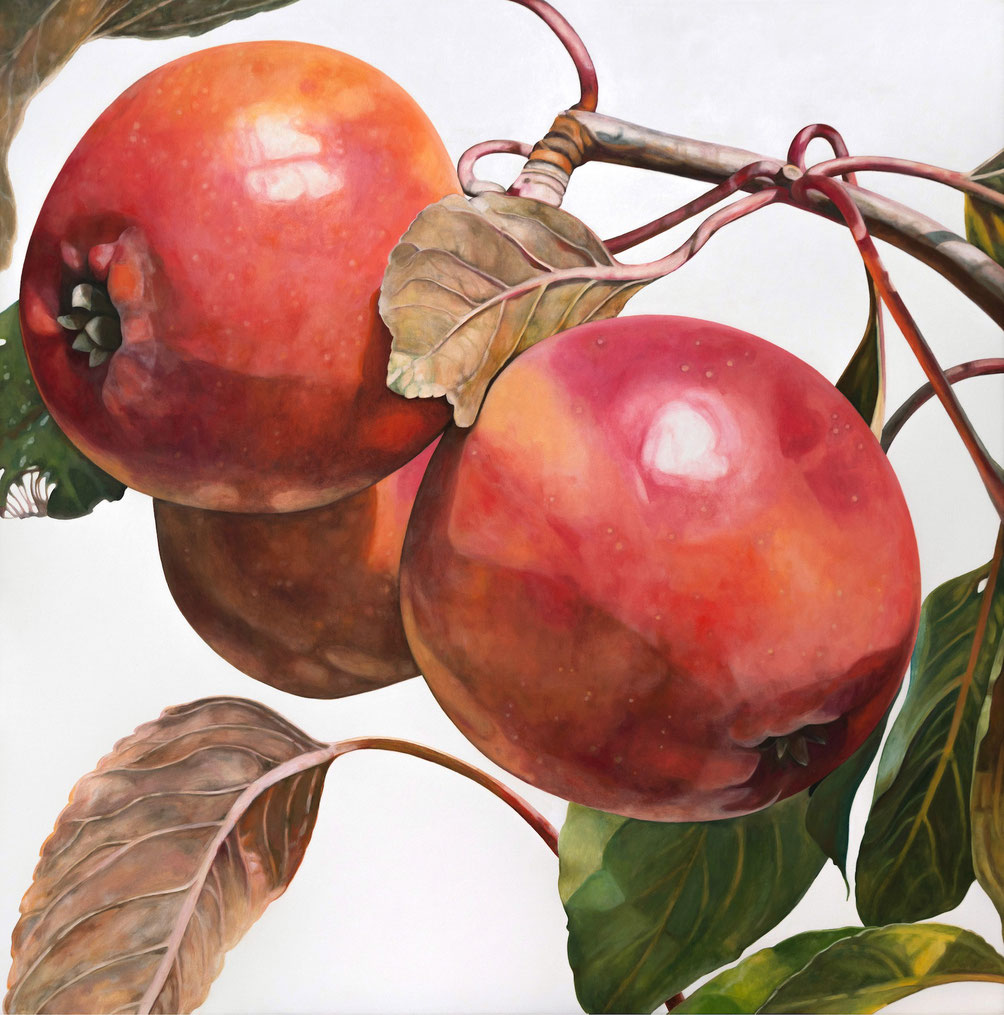 malus domestica heidelberger blutapfel II, 2018, 110x110cm, oil on linen