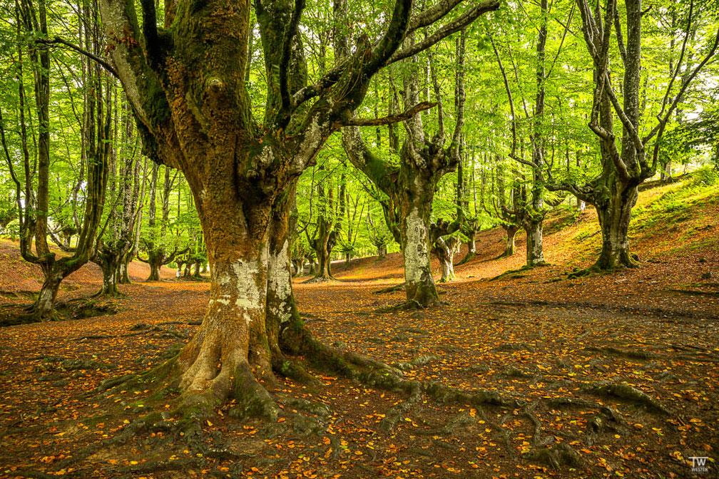 Morgens im Gorbeia Naturpark (B1811)