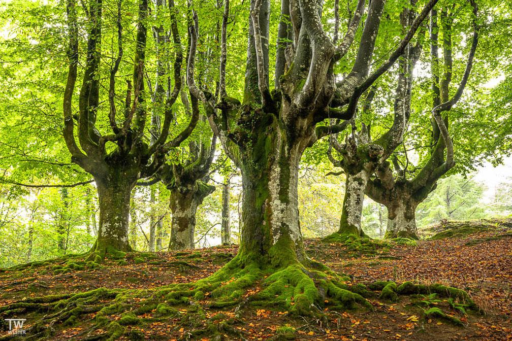 Der Wald ist in Wirklichkeit extrem dunkel, doch die Bewölkung ließ glücklicherweise lange Belichtungszeiten zu (B1809)