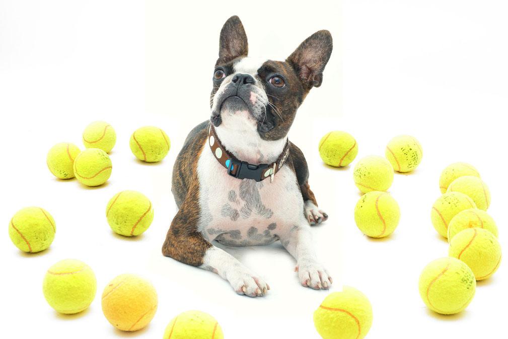 Hund Ball spielen Auslastung Ball-Junkie