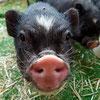 Cloony Cocker Spaniel Welpe Notfall Zuhause gesucht Association CANIMA Zukunft für Tiere Tiervermittlung Notfall