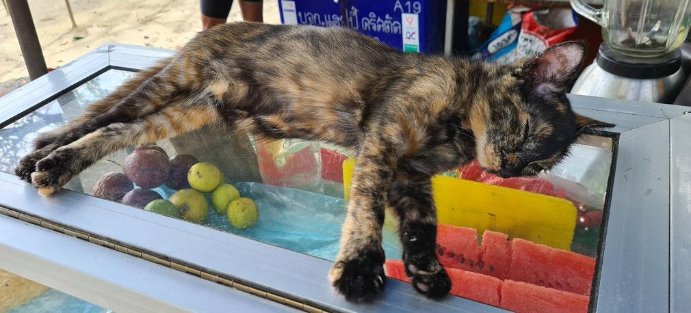 Katinas Tailando paplūdimyje