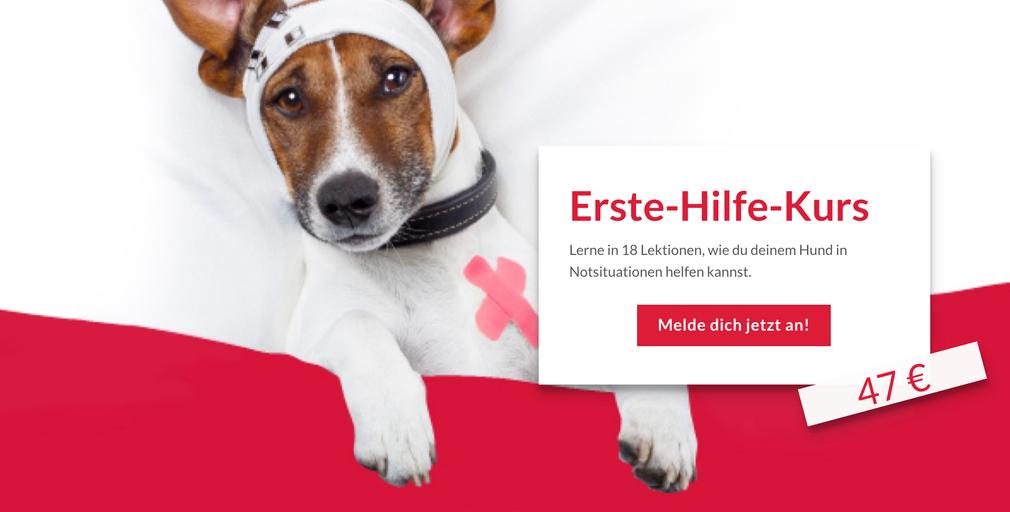 online Hundetraining, toll, Videos, erste Hilfe Kurs für Hunde, Notfall, Verletzung