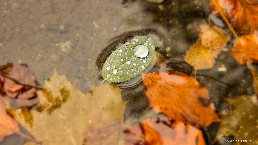 Alles im Fluss - Herbstimpressionen