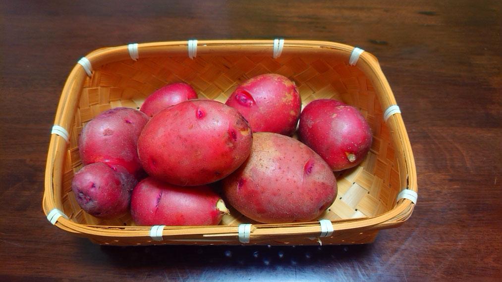 サツマイモみたいなジャガイモ
