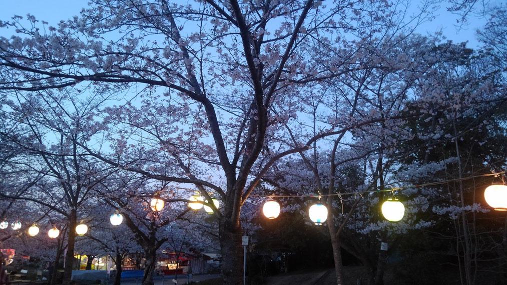 妙見桜も見ごろです♪
