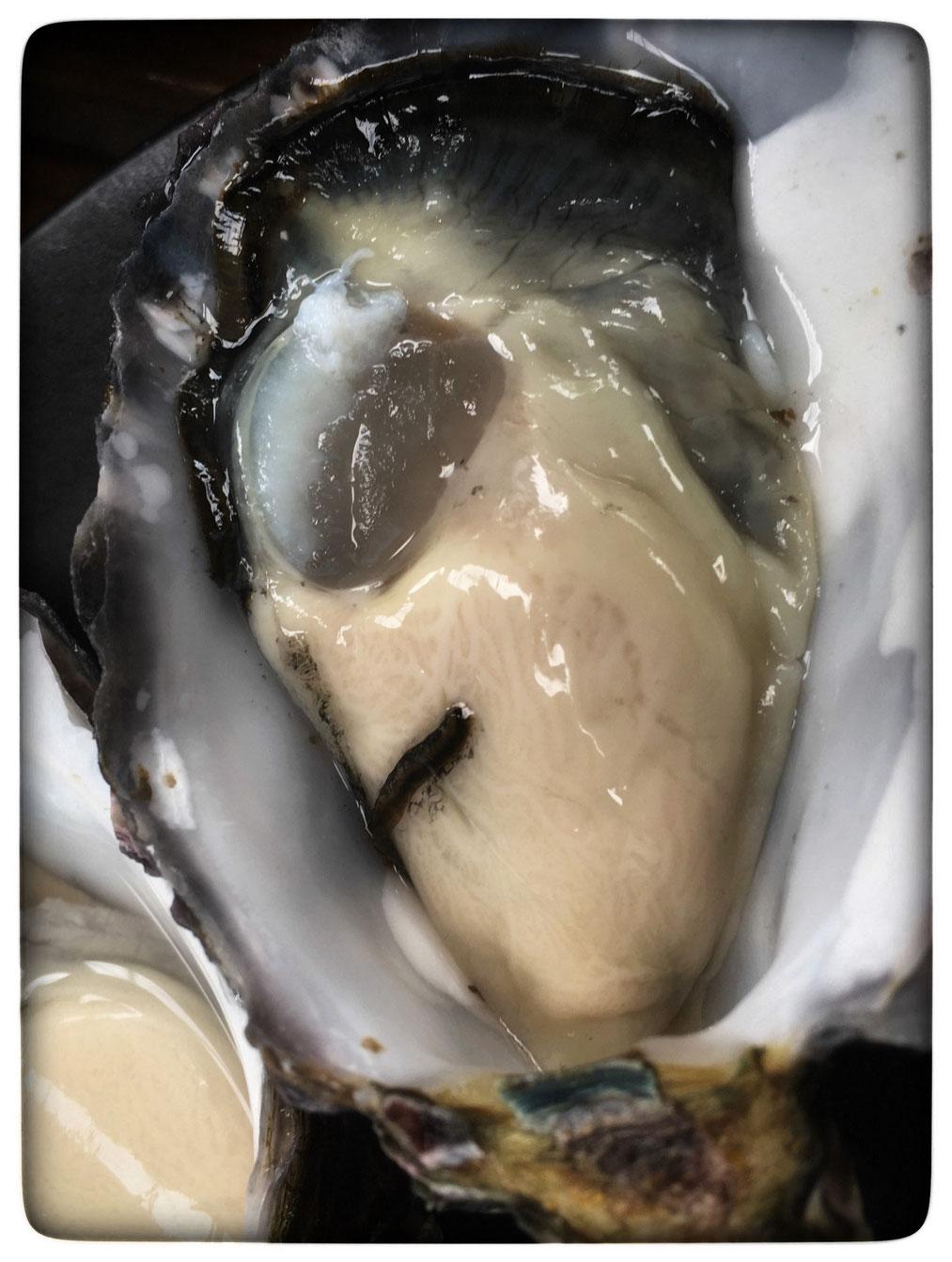 Austern sind Aliens