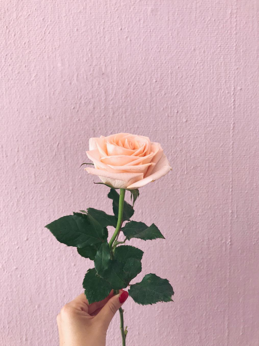 Unsere Lieblingsblumen Im Juni Hochzeitsfloritik