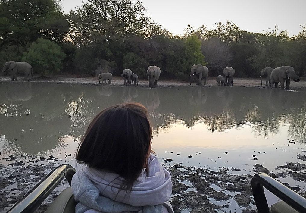 Apéro avec les éléphants
